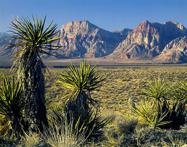 Photograph - 211702-yucca And Rainbow Mountain, Nv by Ed  Cooper Photography