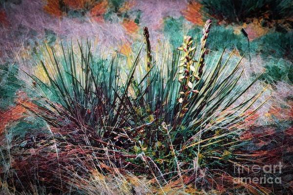 Photograph - Yucca Gone Wild by Jon Burch Photography