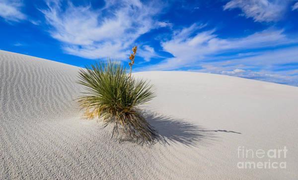 Yucca Elata Wall Art - Photograph - Yucca In Shifting Sands by Craig Hinton