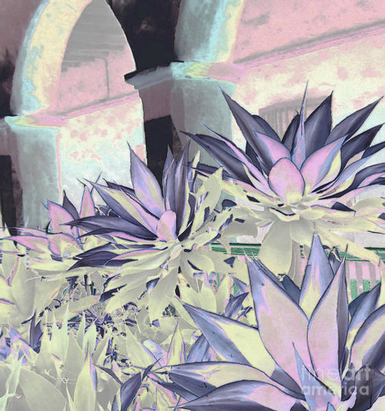 Delicate Arch Digital Art - Yucca Light by Ann Johndro-Collins