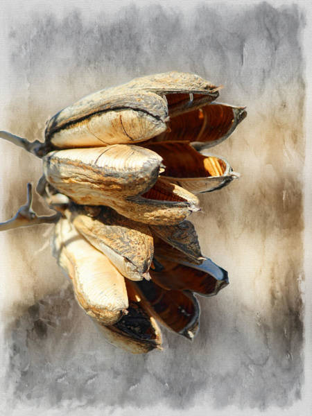 Pod Mixed Media - Yucca Pod Silver And Gold by Barbara Chichester