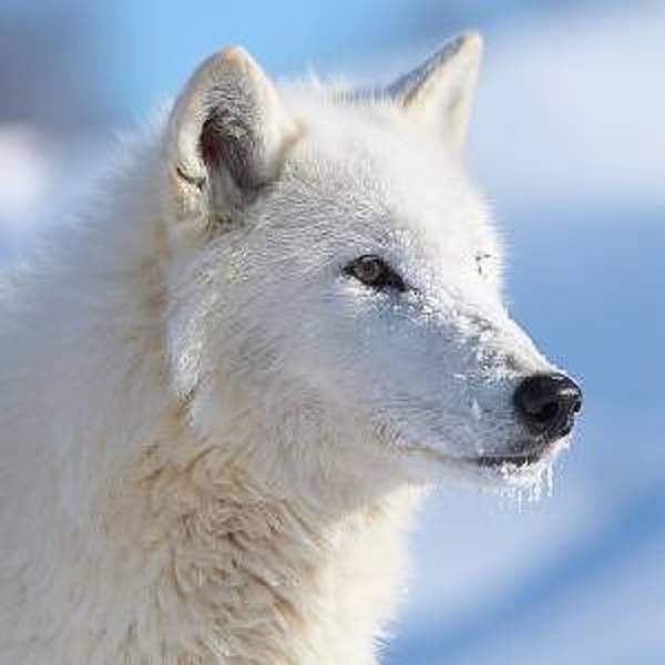 Willett Photograph - Yukon Canada by Cristy Simmons - Willett