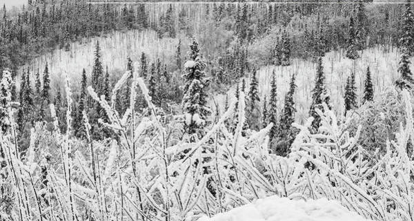 Photograph - Yukon Snow Scene Black And White Contrast by Phyllis Spoor
