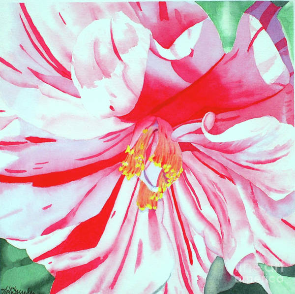 Wall Art - Painting - Yuletide Camellia by Annette McGarrahan