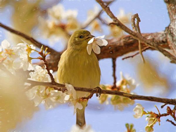 Finch Photograph - Yummy Flower by Donna Kennedy