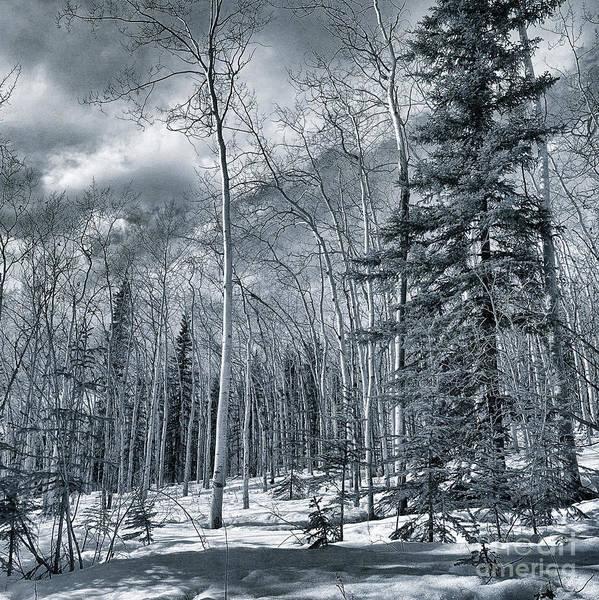 Tundra Wall Art - Photograph - Land Shapes 35 by Priska Wettstein