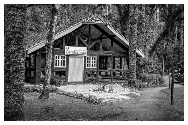 Photograph - Zarabatana-bosque Do Silencio-campos Do Jordao-sp by Carlos Mac