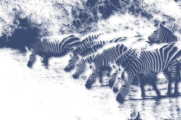 Kruger Photograph - Zebra 3 by Joe Hamilton
