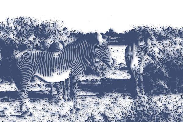 Kruger Photograph - Zebra 4 by Joe Hamilton