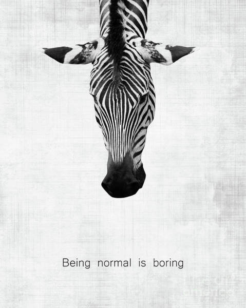Different Animals Photograph - Zebra Being Normal Is Boring by Delphimages Photo Creations