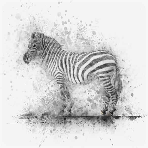 Drawing - Zebra by Christina VanGinkel