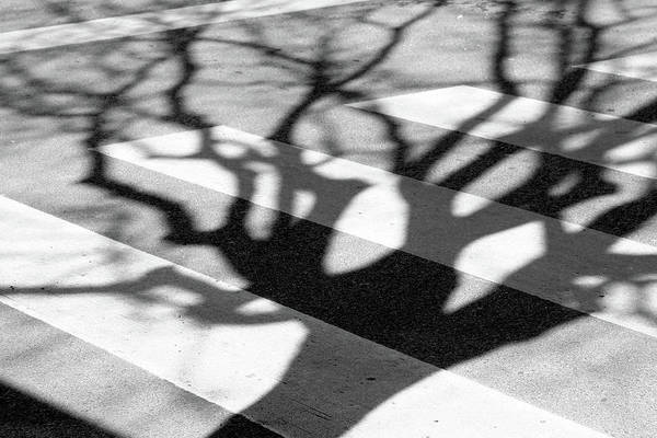 Wall Art - Photograph - Zebra Crossing, Tree Shadow by Anna Lemos