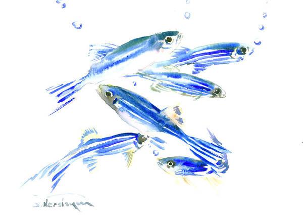 Blue Fish Painting - Zebra Fish, Danio by Suren Nersisyan