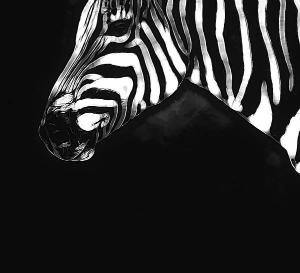Photograph - Zebra Look by Alice Gipson