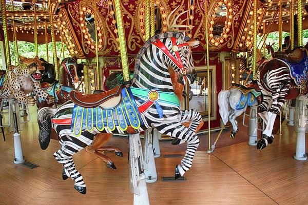 Photograph - Zebra Merry Go Round Series by Carlos Diaz