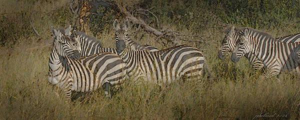East Africa Digital Art - Zebra On The Serengeti by Joseph G Holland