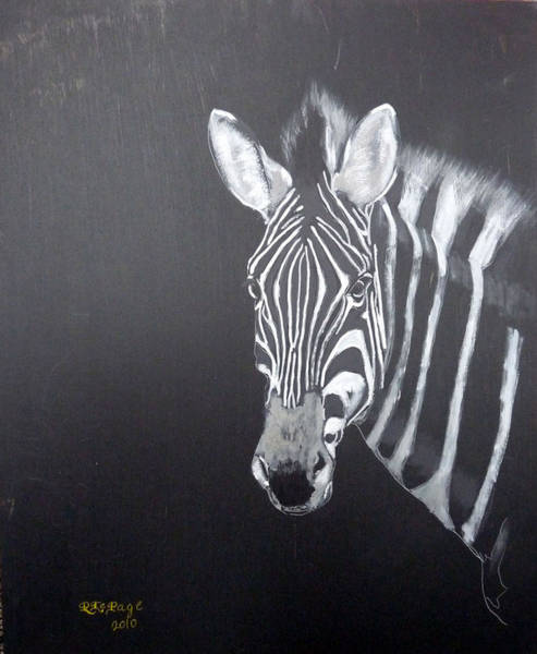 Painting - Zebra by Richard Le Page