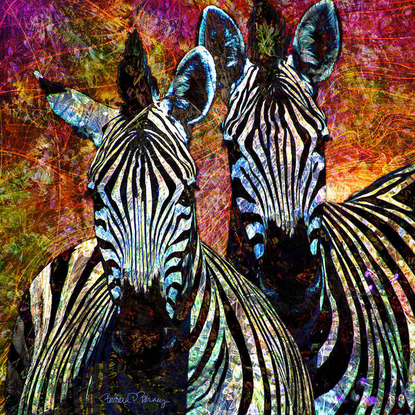 Digital Art - Zebras by Barbara Berney