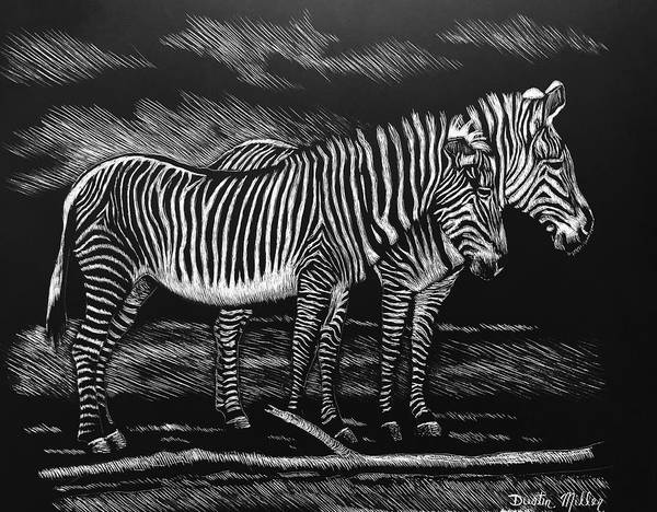 Drawing - Zebras by Dustin Miller