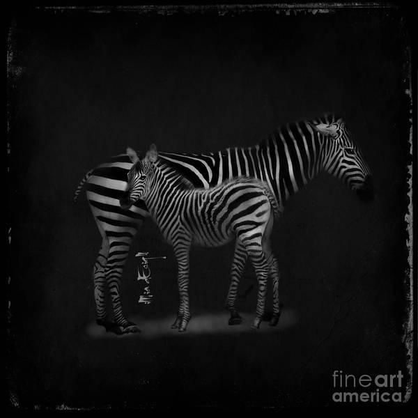 Wall Art - Digital Art - Zebras by Maria Astedt