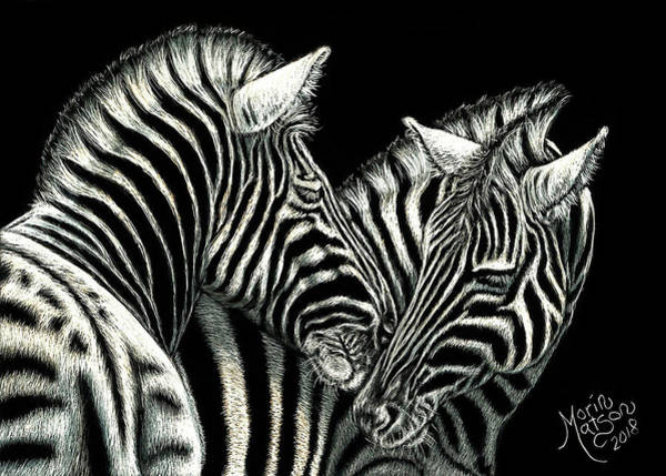 Drawing - Zebras by Monique Morin Matson