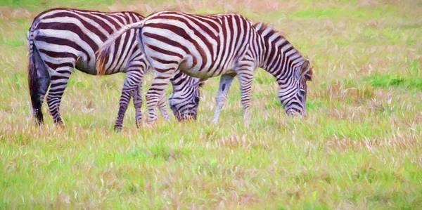 Photograph - Zebras On Plains by Alice Gipson