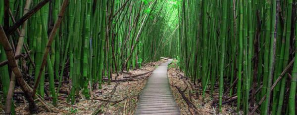Bamboo Photograph - Zen  by Brad Scott