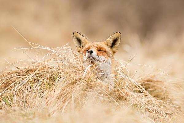 Wall Art - Photograph - Zen Fox Series - Zen Fox 2.7 by Roeselien Raimond