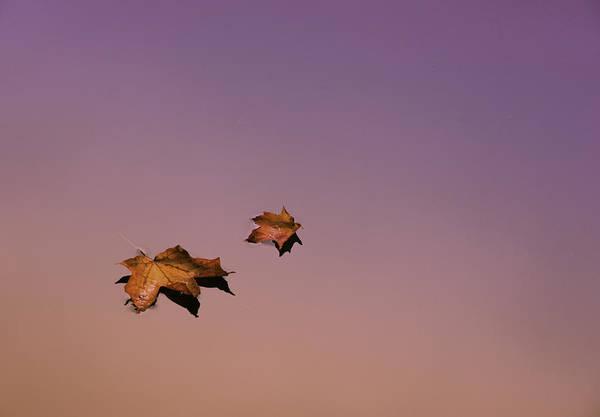 Photograph - Zen Leaves by T-S Fine Art Landscape Photography