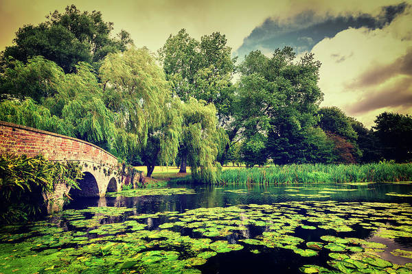 Photograph - Zen Meditation Lily Pond by John Williams