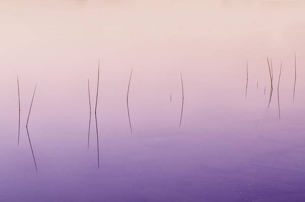 Photograph - Zen Reeds  by T-S Fine Art Landscape Photography