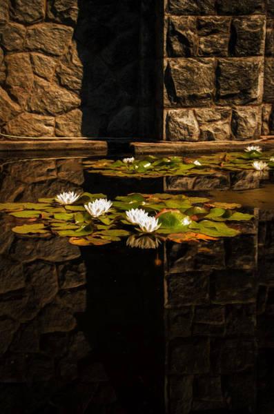 Photograph - Zen Reflections 2 by Marilyn Wilson
