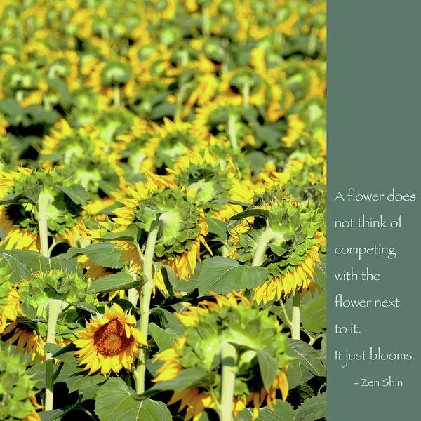 Proverb Photograph - Zen Shin Quote On Competition by Heidi Hermes