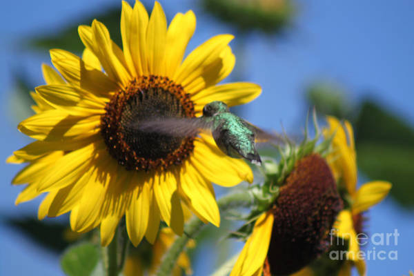 Photograph - Zeroing In On The Subject Matter by Cathy Beharriell