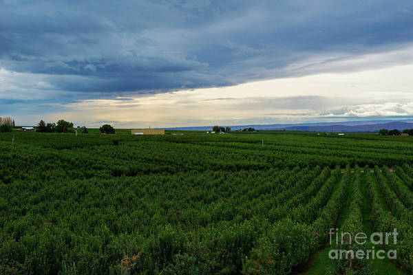 Orchard Photograph - Zillah Orchard View by Mike Dawson