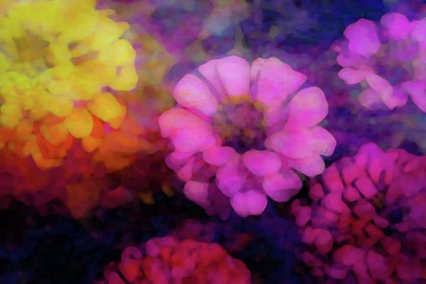Photograph - Zinnia Color 3793 Dp_2 by Steven Ward