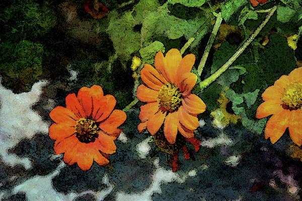 Photograph - Zinnia Digital Painting 1923 Dp_2 by Steven Ward