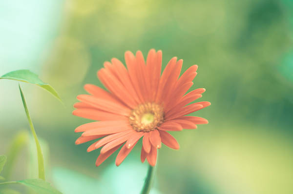 Wall Art - Photograph - Zinnia In The Day by Melissa  Riggs
