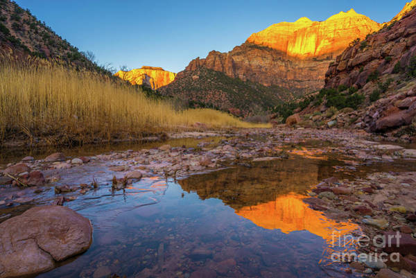 Wall Art - Photograph - Zion Golden Sentinel Reflection by Mike Reid