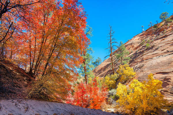 Photograph - Zion Autumn Colors by John M Bailey
