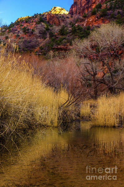 Wall Art - Photograph - Zion Canyon Grasses And Rock by Mike Reid