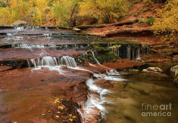 Wall Art - Photograph - Zion Cascades by Jamie Pham