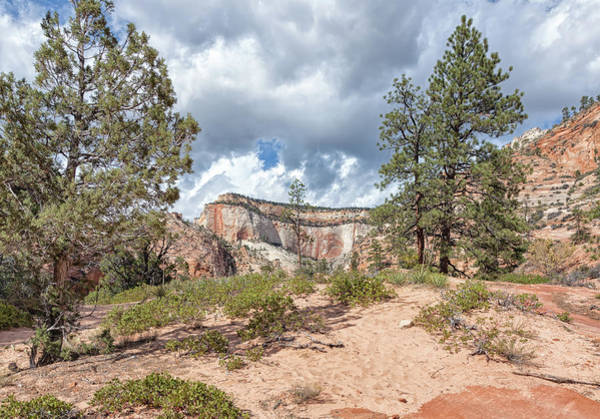 Photograph - Zion High Plateau by John M Bailey