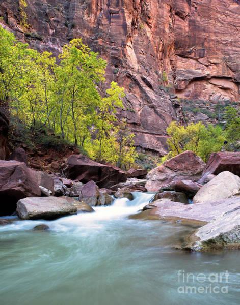 Photograph - Zion In The Fall Utah Adventure Landscape Art By Kaylyn Franks by Kaylyn Franks
