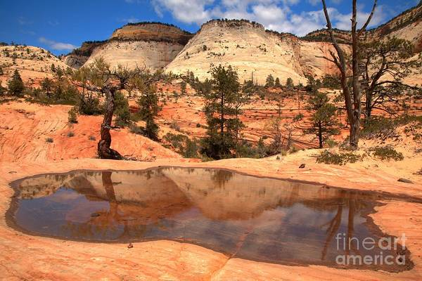 Photograph - Zion National Park East Reflections by Adam Jewell