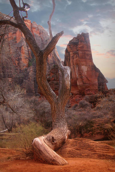 Photograph - Zion National Park by Patricia Montgomery