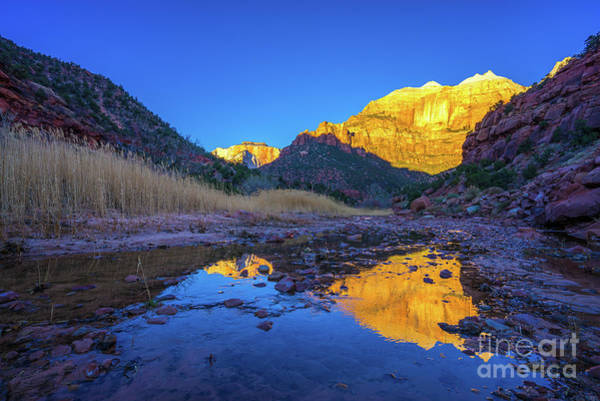 Wall Art - Photograph - Zion The Sentinel Golden Light by Mike Reid