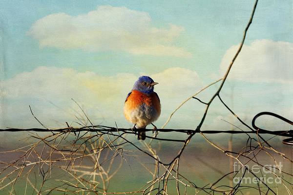 Photograph - Zip-a-dee-doo-dah by Beve Brown-Clark Photography