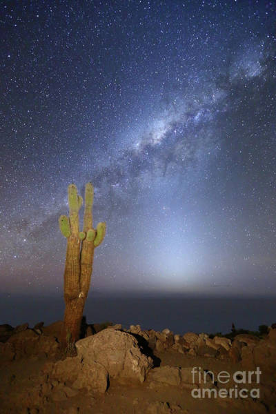 Photograph - Zodiacal Light Milky Way And Giant Cactus Incahuasi Island Bolivia by James Brunker