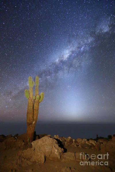 Wall Art - Photograph - Zodiacal Light Milky Way And Giant Cactus Incahuasi Island Bolivia by James Brunker